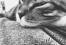 Mycat -Odin-