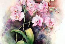 suluboya orkide