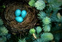 Birds / by Pollyanna.is Webstore