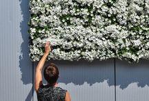 KAROO / Indoor & outdoor green wall
