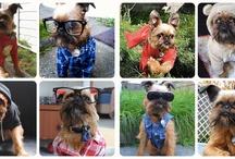pups & pet stuff / by liz cherry