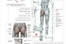 Buttocks / Ягодицы