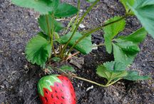 Gardening and farm life