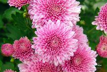 Flowers | Pink / Flowers | Pink