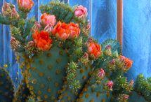 cactus / by Karen Acton