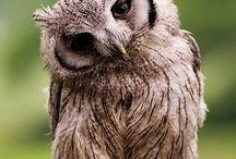 OWLS / by Amber Carstensen