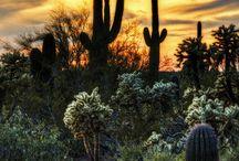 Arizona / by Terry Todd