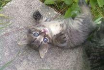 Mia la gatta / Evoluzione di una gatta