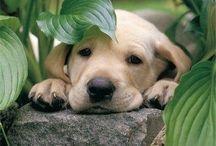 tierische Lieblinge