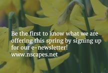 Naturescapes News / Like this board to get the latest offerings at Naturescapes, great advice, articles and more! www.nscapes.net  #Armonk #Landscape #Flowers #ContainerGardens #Gardens #Westchester #NY #Bedford #Chappaqua #Greenwich
