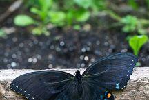 Delikatność, motyle