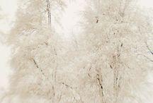 Cream Winter Wonderland