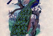 peacocks / by Lynn Surman