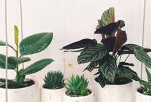 flowerpot / pot | flowerpot | flower | flowers | plant | plants | ceramics | porcelain | succulent | succulents | exotic | leaf