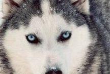 Cachorros // Dogs / <3