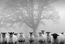 Black & white photo,s