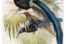 vintage vogels