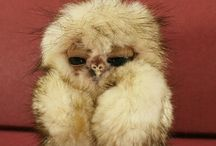 Owls.... beautiful  creatures