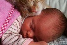fotos bebê com gatinhos