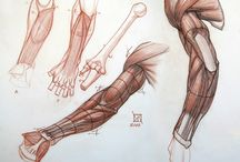 Anatomy - Arm
