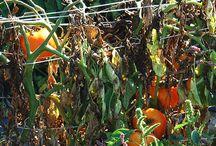 Gardening: Crop Rotation / by Wayfaring Stranger