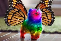 Rainbow Butterfly Unicorn