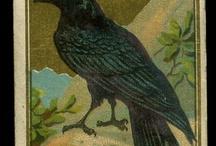 Raven at Random