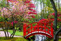 Japanese Garden / Japanese Garden is a great place to go I have been there its amazing things to do over there.