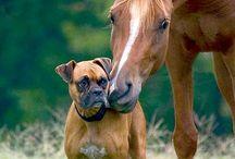 Собаки боксеры