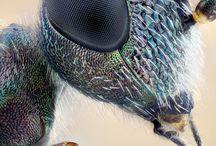 barevný svět hmyzu, hadů a jiných živočichů