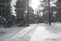 Cross Country Skiing in Pagosa Springs, CO