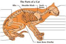 Veterinary stuff