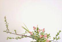 ikebana, aranžování květin