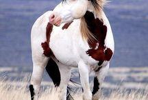 Horses & gear