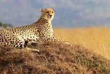 Kenya / All about Magical Kenya