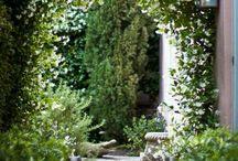 Nic garden