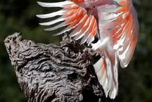 Exotic Birds & Pet related Group / Our group board about Birds & Pet related news,articles & information...