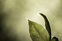 New Hue: Olive / Design inspiration for our freshest new hue.