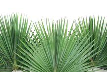 · palms ·