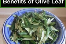 Extracts..olive leaf, hawthorn,celwey,