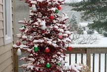 Christmas Trees / by Michelle Beaver