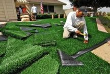 Lawn groundcover