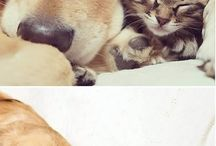Animal / Cute and funny animals.