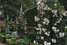 Roses on obelisks