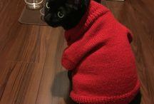 Black, black/white kitty