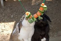 Perfect Kaninchen