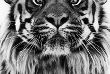 Animals I Love  / Animals I wish to become and live with...