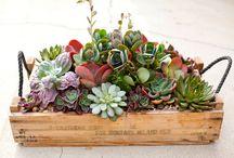 Succulents / by Dawn Teyhen
