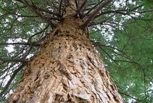 Tree's I love