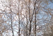Tverrelvdalen / Borrasveien